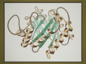 Pastel Drawing of Triose Phosphate Isomerase Ribbon